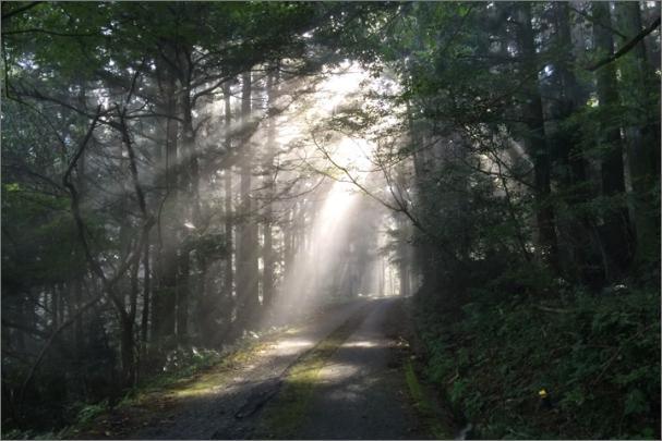 林道に日が射し込む